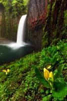 """""""Abiqua Falls"""""""