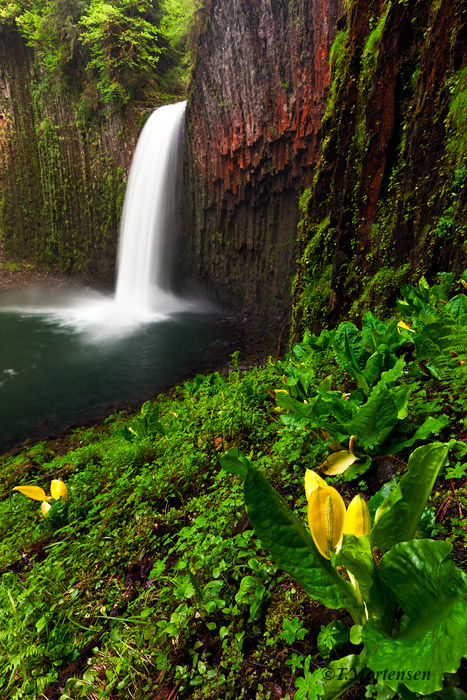 Abiqua Falls is set in a spectacular basaltic amphitheater with moss and lichen covered walls complimented with abundant...
