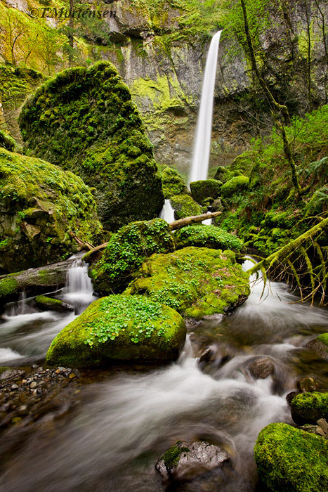 Tucked back into the Columbia River Gorge is the beautifal Elowah Falls.