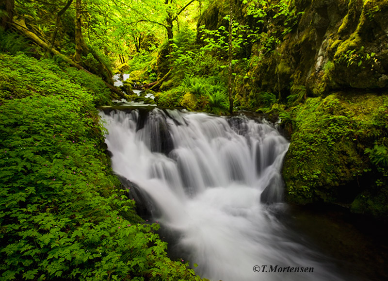 Soft light illuminates into this narrow canyon of Emerald Falls as pink wildflowers line the river bank.