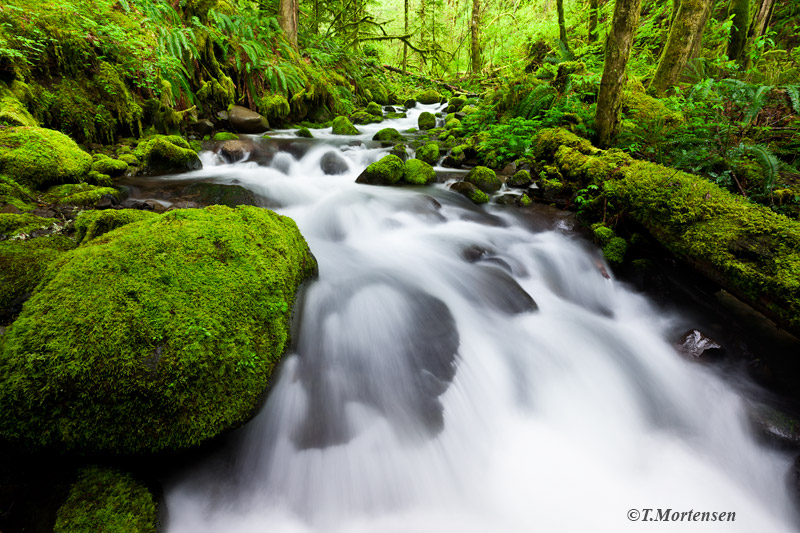 A beautiful moss lined creek I discovered while exploring off trail deep in the Columbia Gorge.