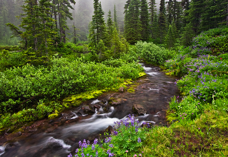 Spent three days hiking in Mt Jefferson Wilderness in the Willamette National Forest when I came across this stream lined with...
