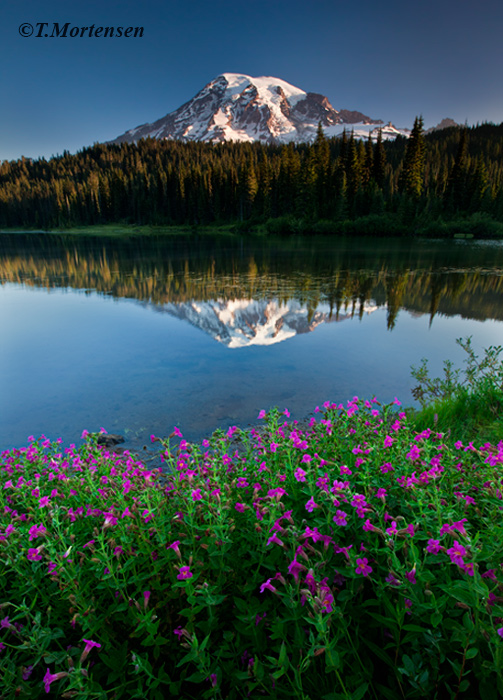 Wildflowers along the bank of Mount Rainier's Reflection Lake.