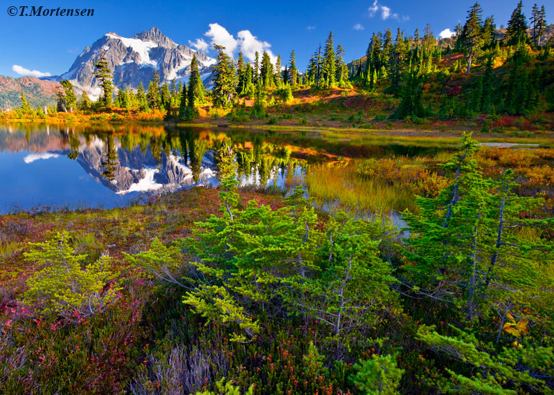 Fall colors emerge around Picture Lake in the North Cascades.