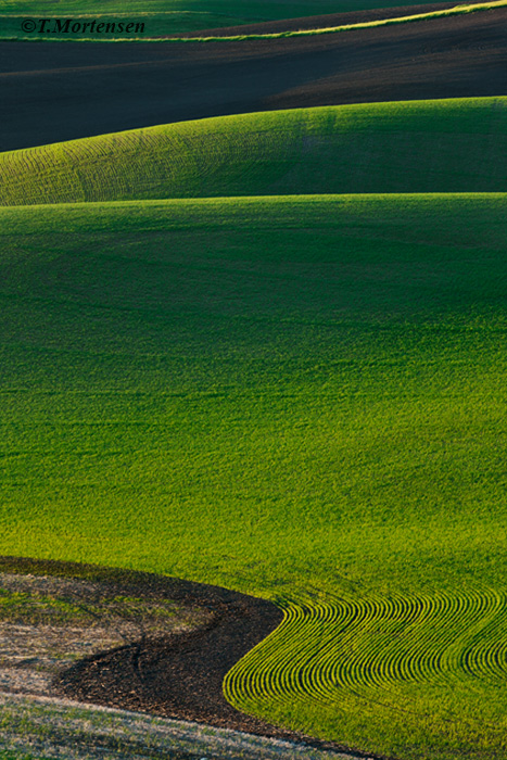 Rolling hills of the Palouse wheat fields during the spring.