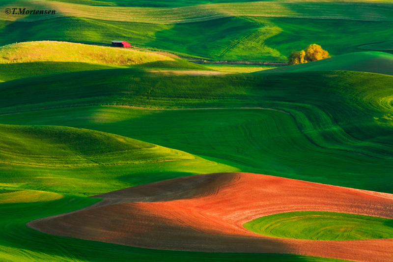 Abstract curves found throughout the Palouse's rolling fields at spring.
