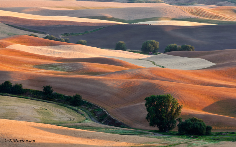 Wheat fields during harvest as seen from Palouse State Park.