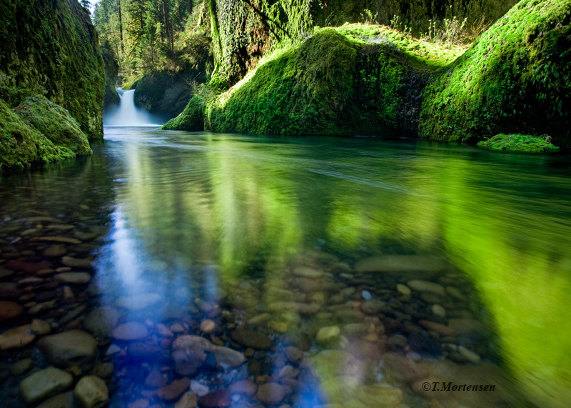 Emerald green rocks line the Columbia River Gorge at Punch Bowl Falls.