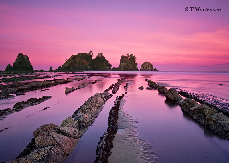 Low tide at sunrise exposes parallel lines of rocks at Shi Shi Beach in the Olympic National Park that are rarely seen.